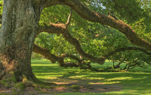 Tree Health Care Services CT