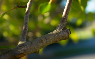 Tree Pruning Services CT