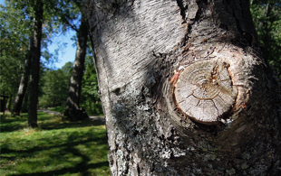 Tree Removal Services CT